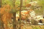 Jogger Discovers Two Horny Gays In Woods